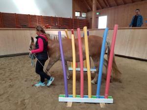 Horse Agility 2017