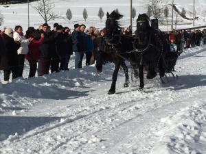 Pferdeschlittenrennen 2016